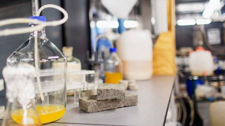 Bio-bricks made from human urine could be environmentally friendly future of architecture